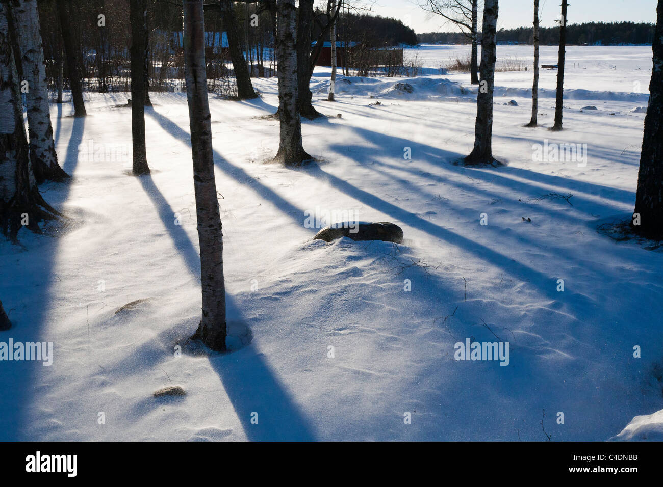 Light playing with tree trunks and whirling snow. - Stock Image