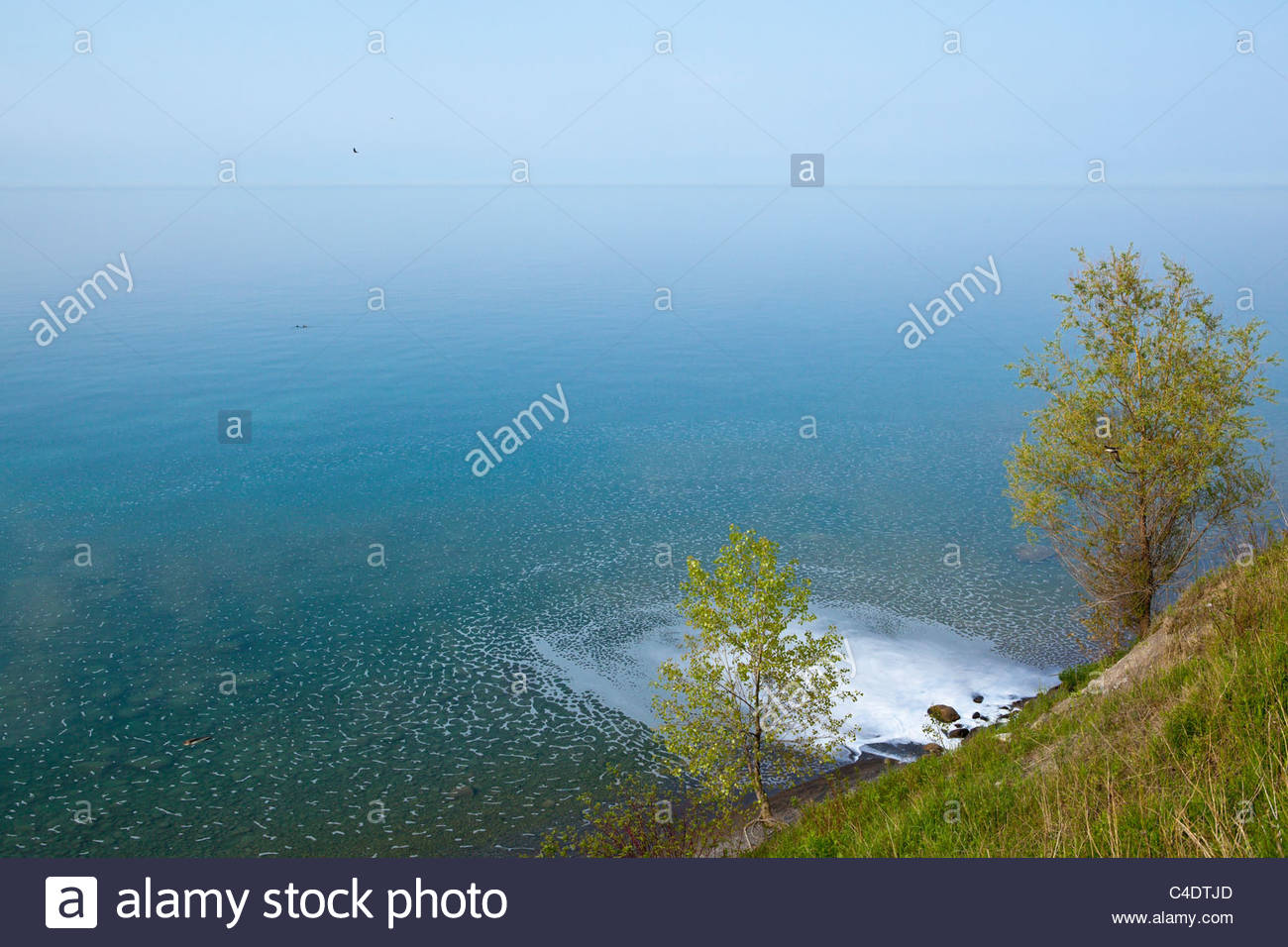 Urban runoff water from a storm sewer entering Lake Ontario in Ontario Canada - Stock Image