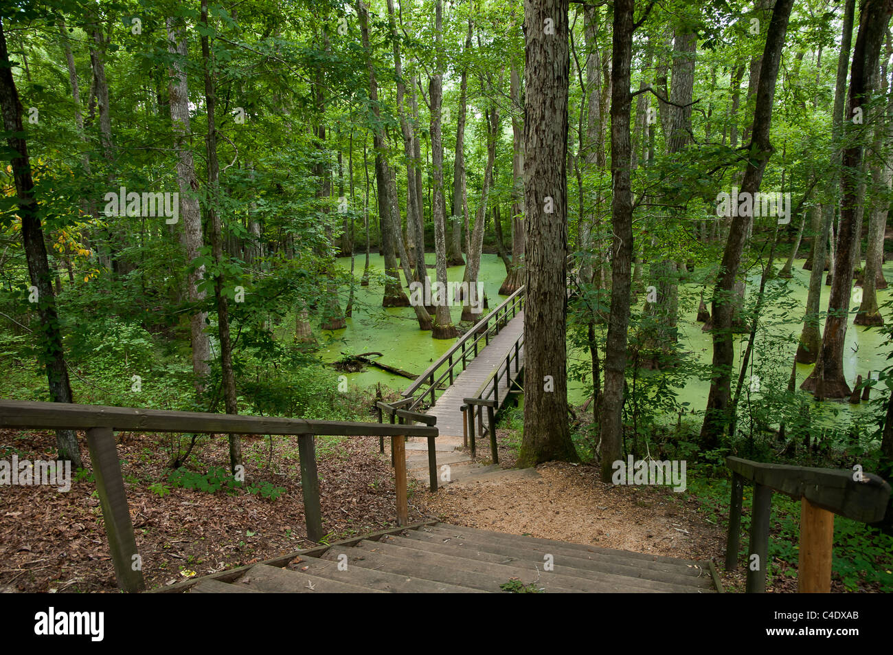 Wooden pathway and bridge leading into cypress tupelo swamp on the Natchez Trace Park in Mississippi. - Stock Image