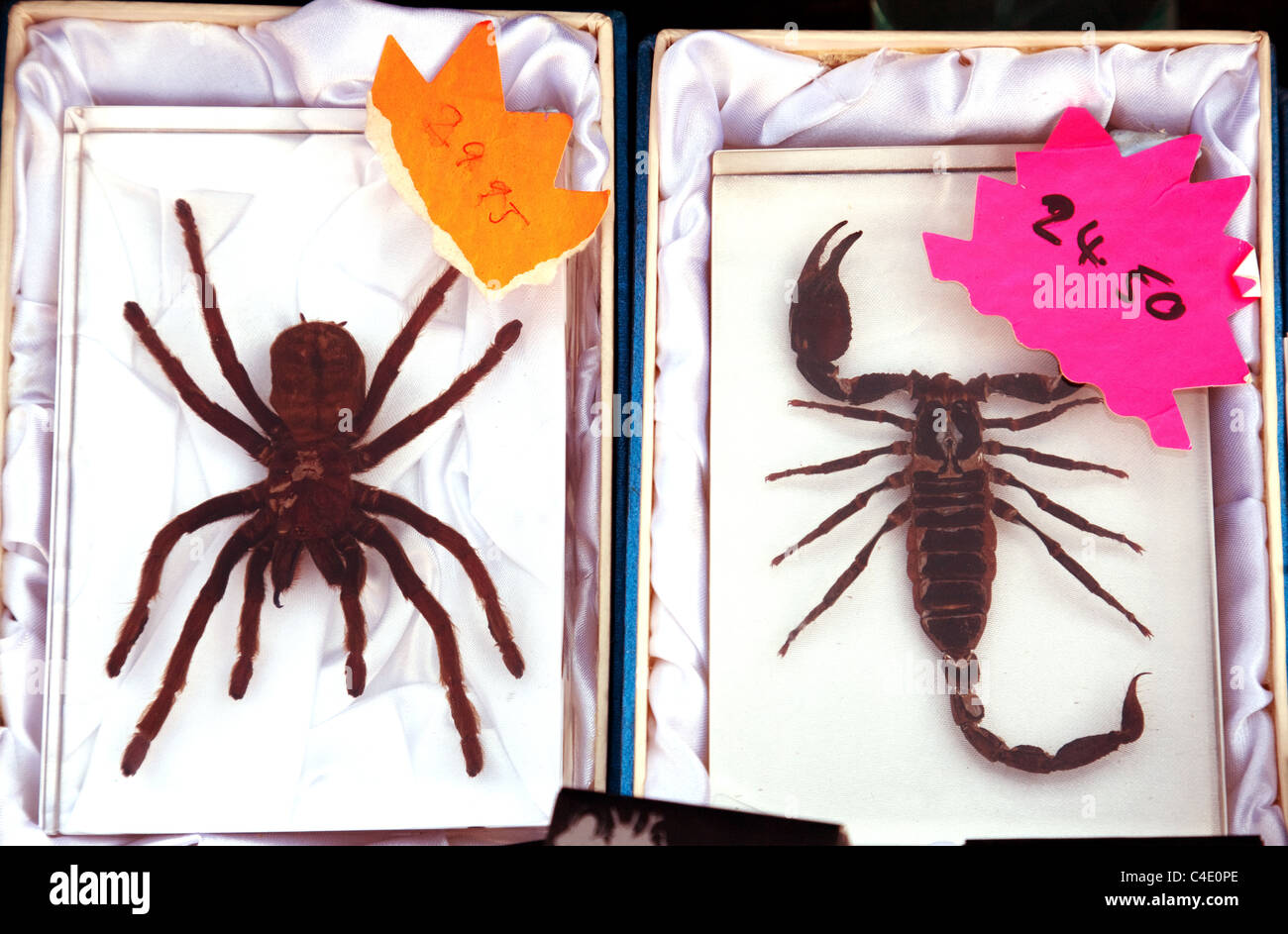 Dead tarantula and scorpion for sale, Newmarket town carnival Suffolk UK - Stock Image