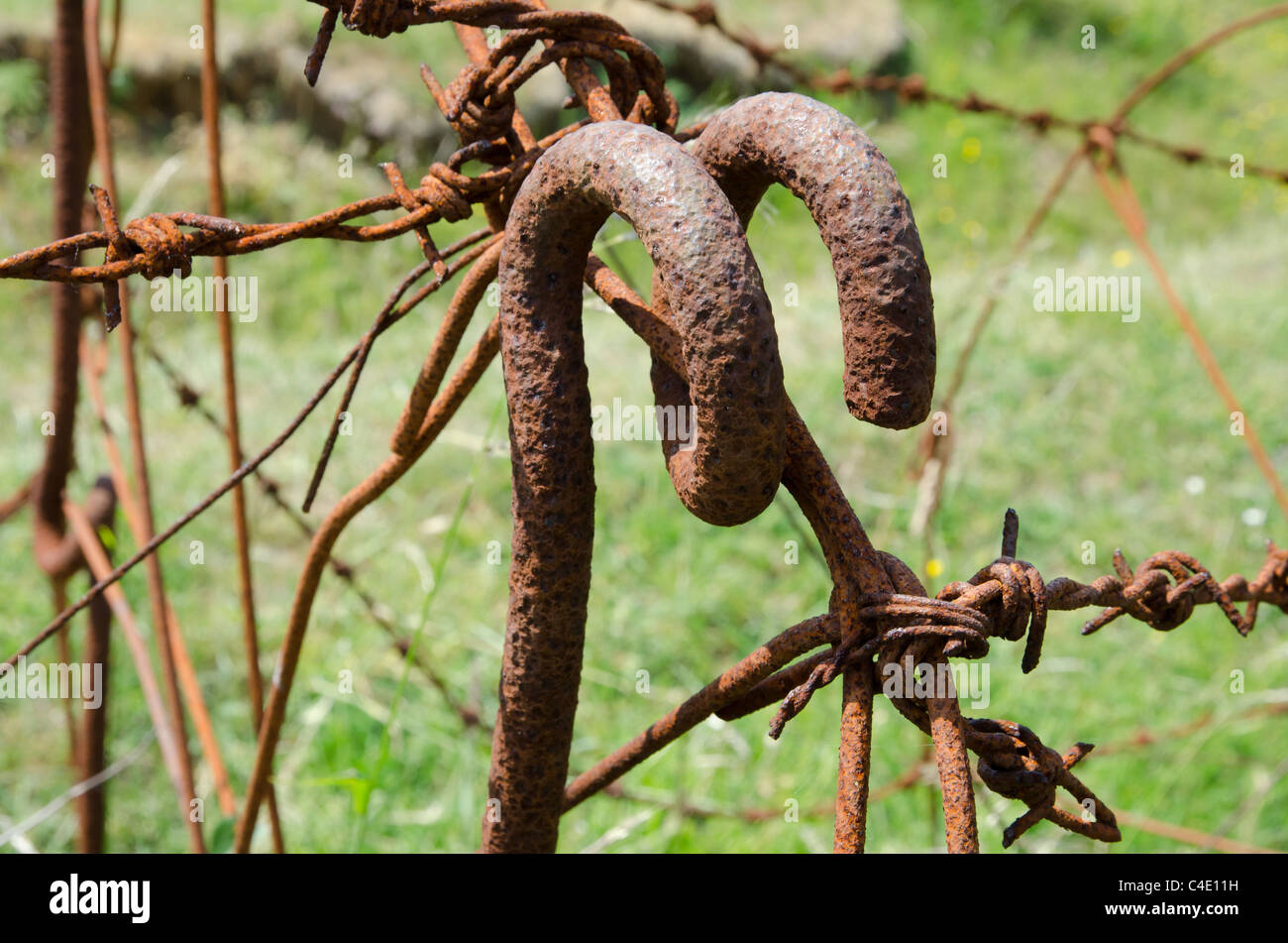 Original barbed wire entanglements from the First World War, Artois, France - Stock Image
