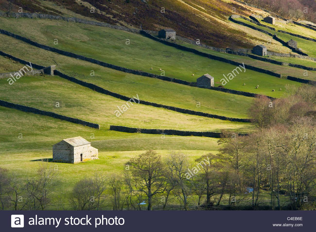 Traditional stone barns, Swaledale, Yorkshire Dales National Park, England - Stock Image