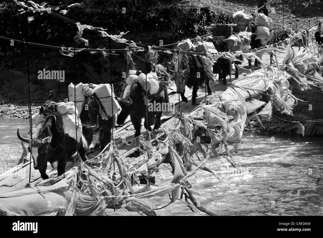 Yak caravan, Luo Za village, south of Ganzi, Sichuan, China - Stock Image