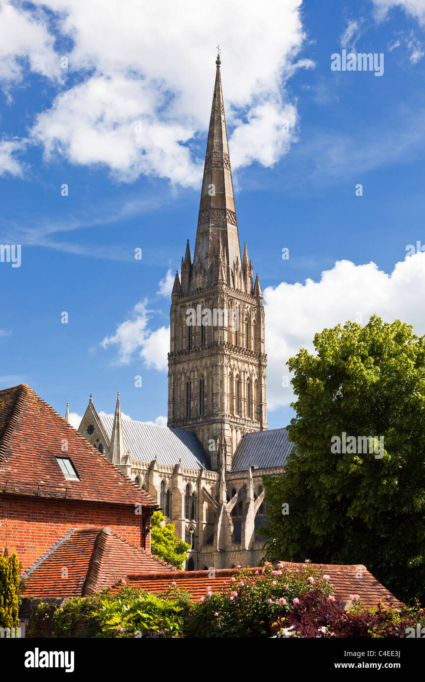 Spire of Salisbury Cathedral, Wiltshire, England, UK from Cathedral Close - Stock Image