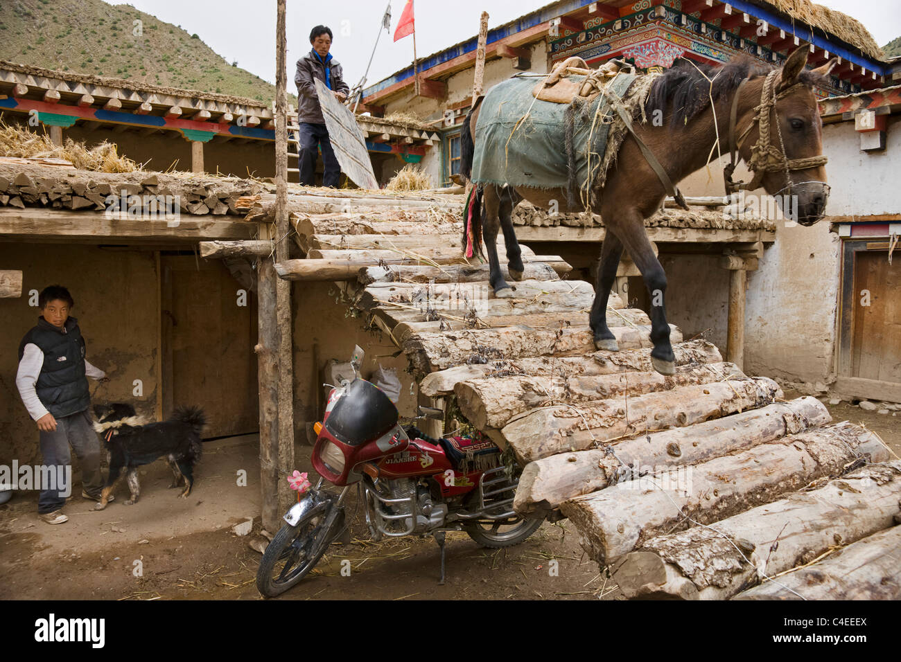 Horses carrying hay back from fields, Lie Da village, Yu Qu valley (a tributary of the Brahmaputra), Tibet. China - Stock Image