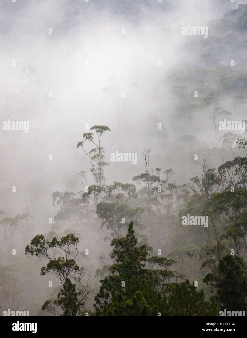 Tropical Rainforest, Taman Negara N.P. - Stock Image