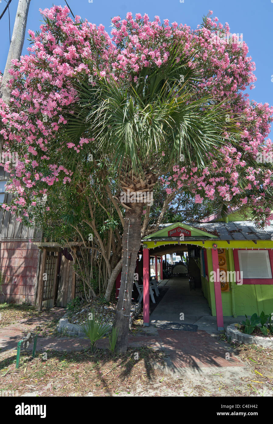 Florida Panhandle Apalachicola.  Boss Oyster restaurant entrance along the waterfront with flowering crape myrtle - Stock Image