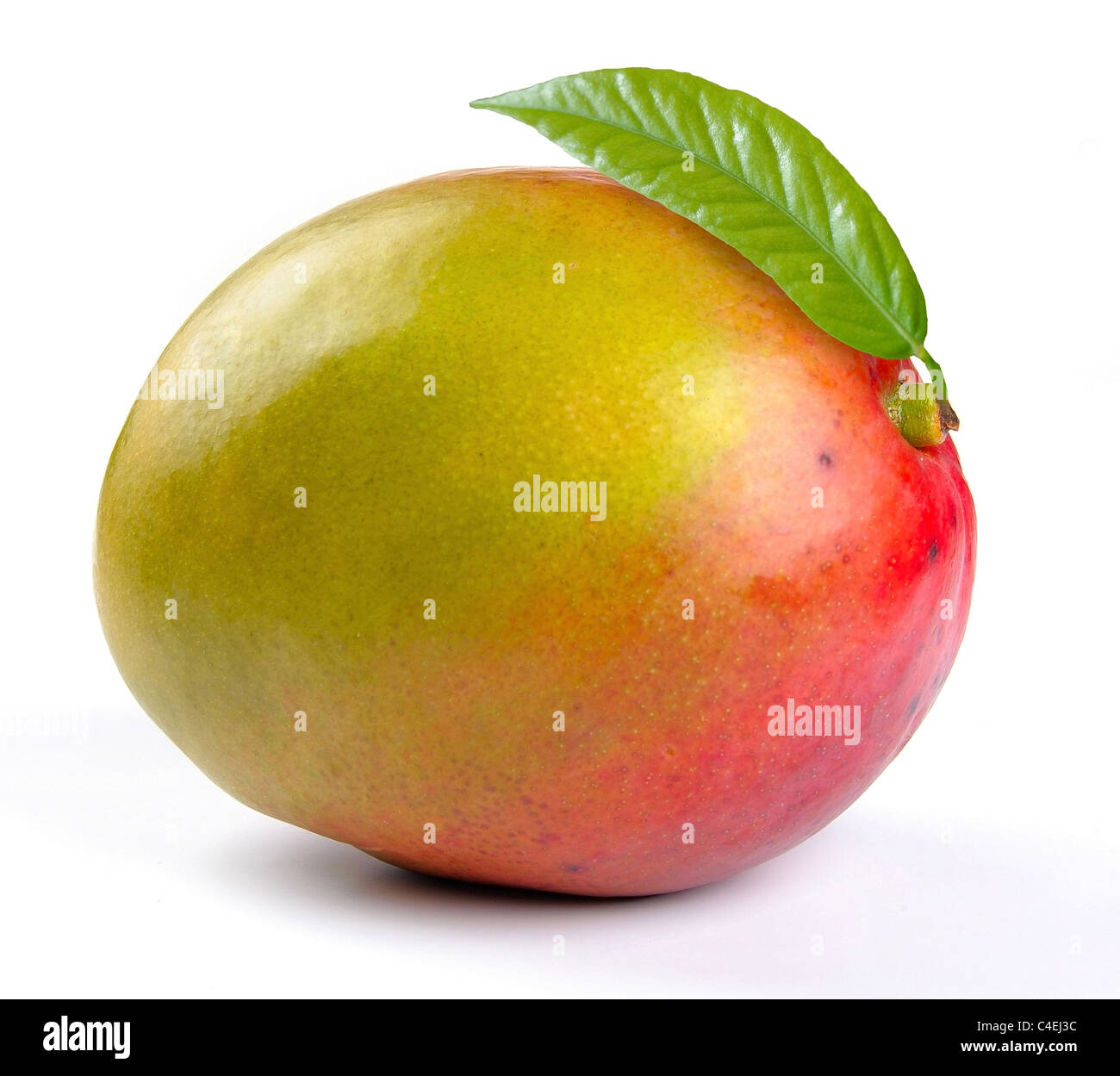 Mango with leaves on a white background - Stock Image