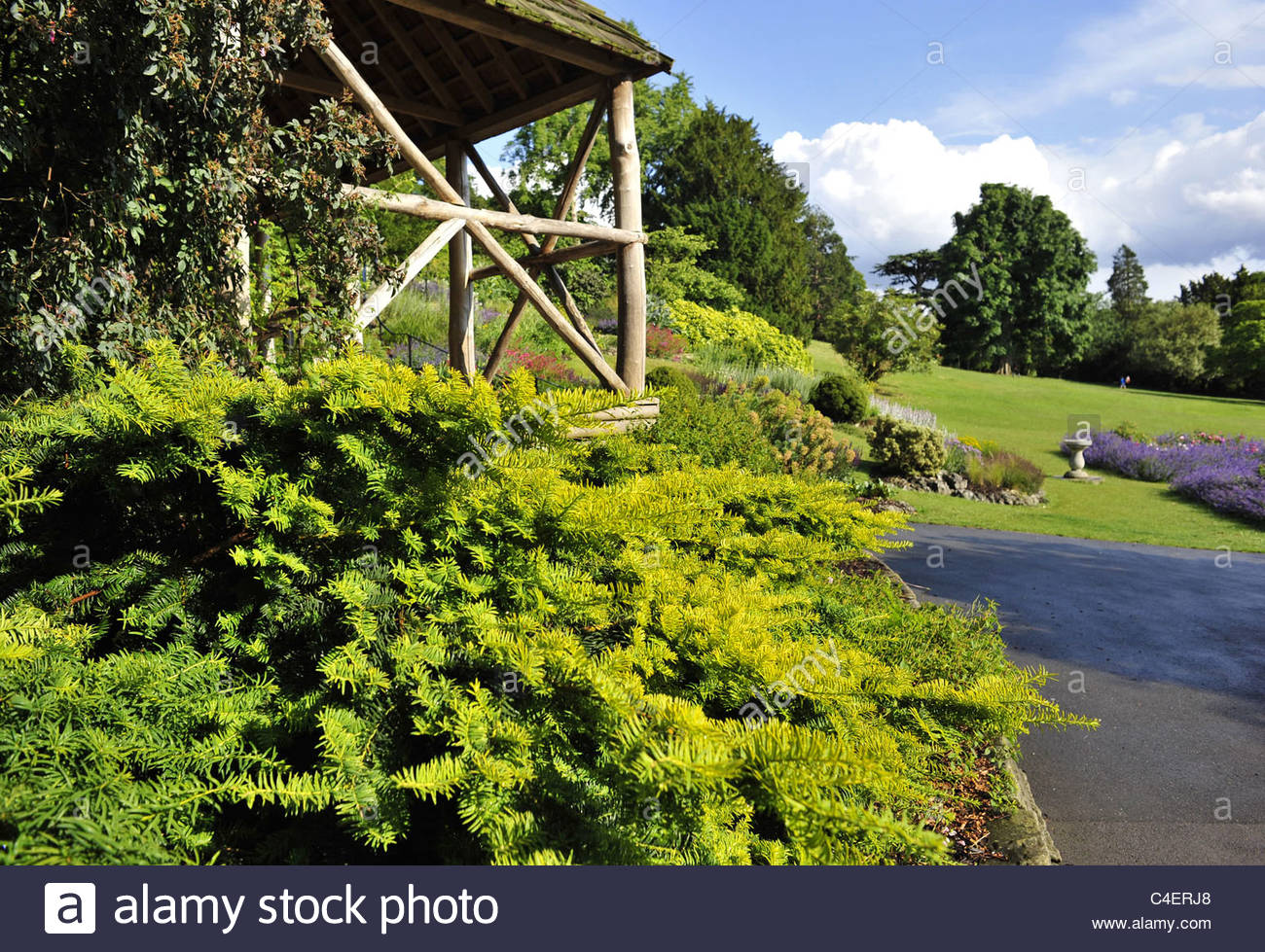 Wooden Pergola and conifer trees in Terrace Gardens Richmond London UK - Stock Image