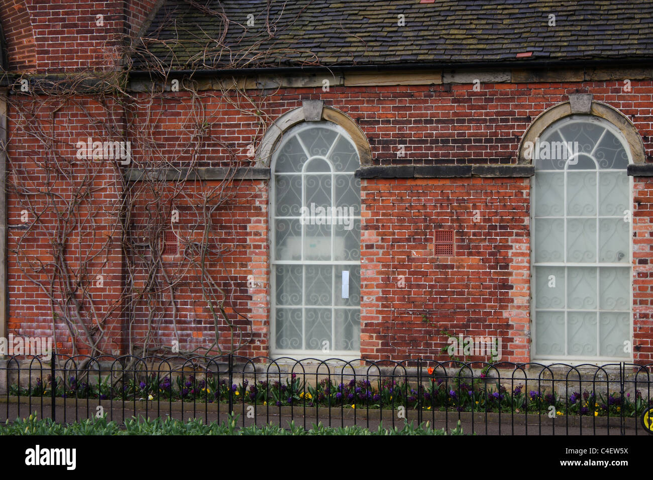 Two arch windows on an overgrown building. - Stock Image