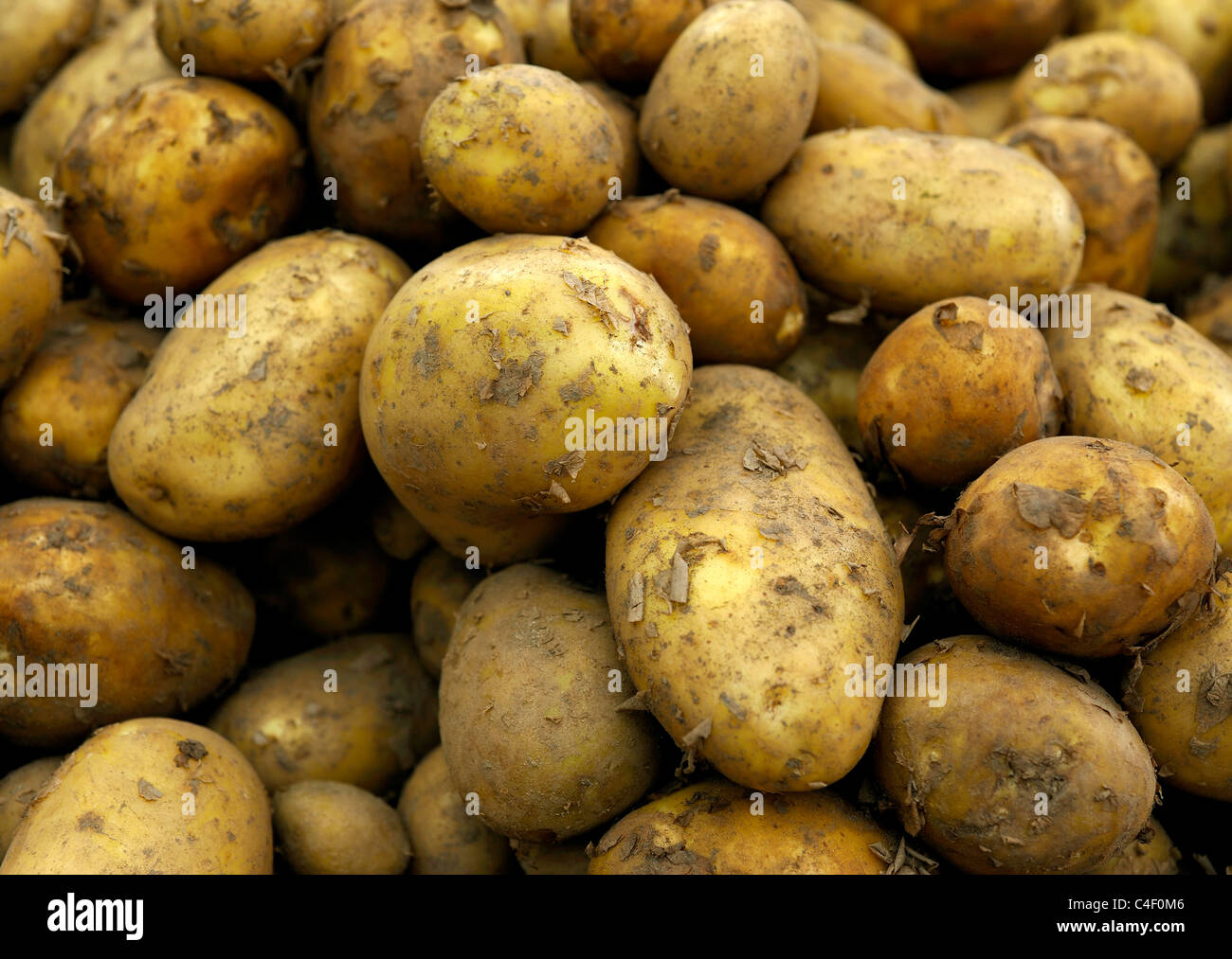 ORGANIC POTATOES - Stock Image