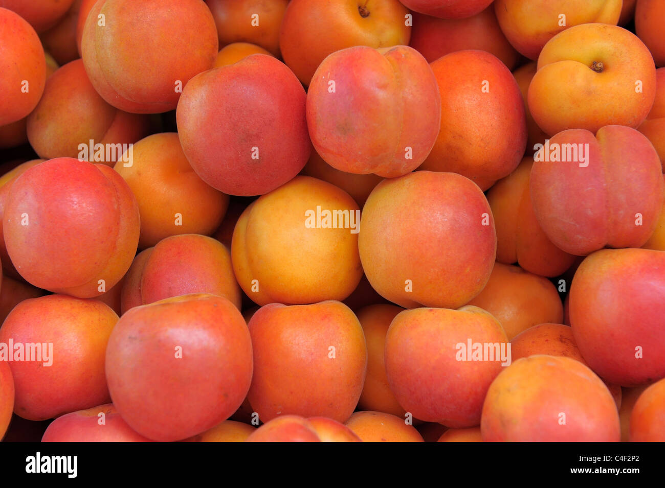 Background from ripe red and orange apricots - Stock Image