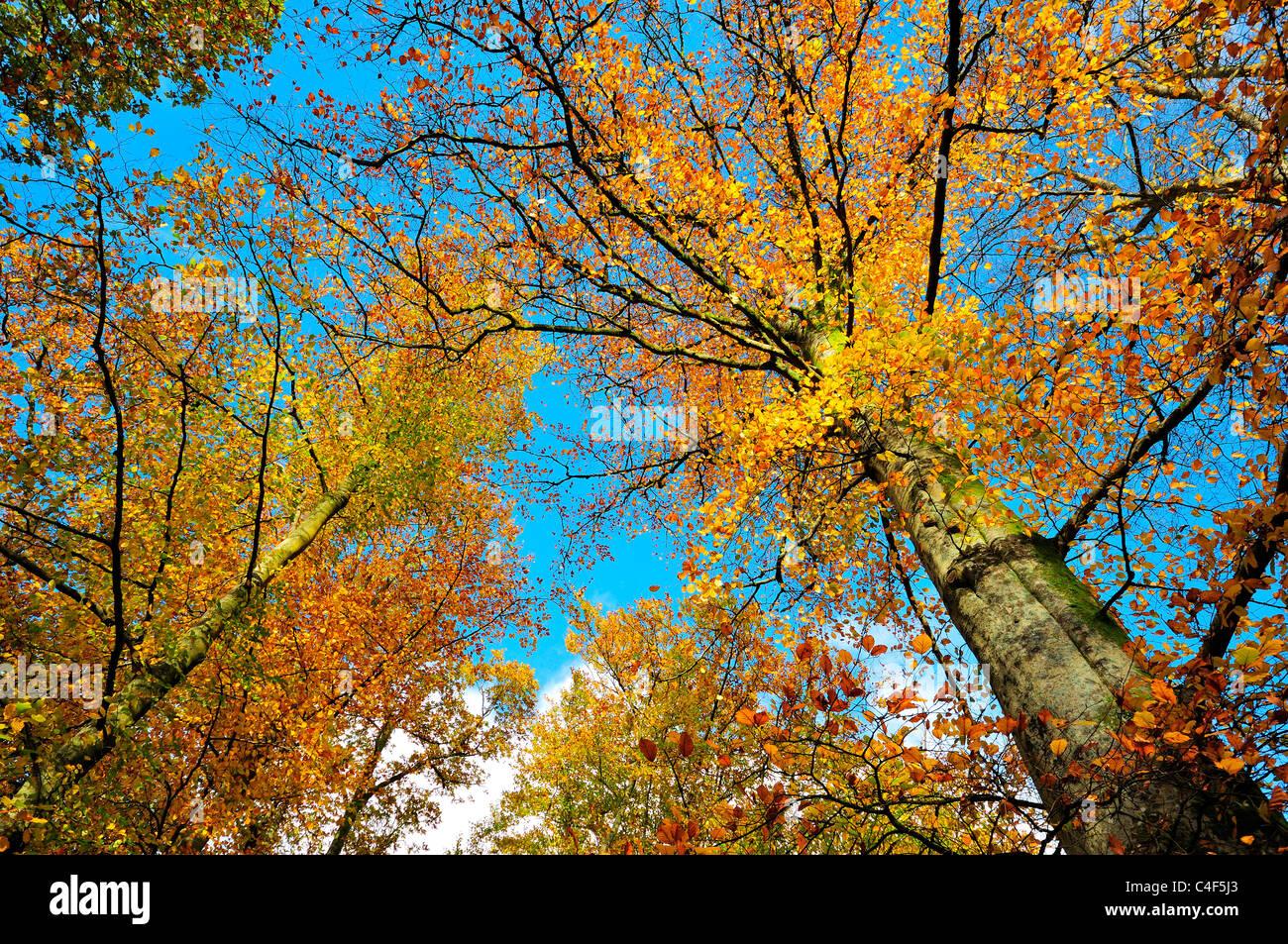 forest,autumn,fall,dappled,sunshine,lake district,cumbria,england,uk,europe - Stock Image