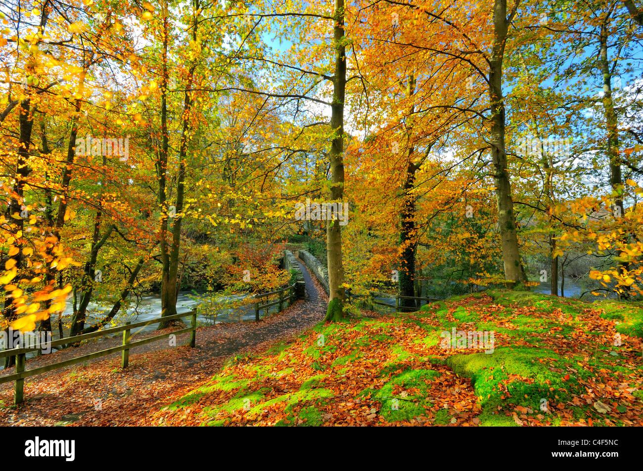 forest,autumn,fall,path,river,dappled,sunshine - Stock Image