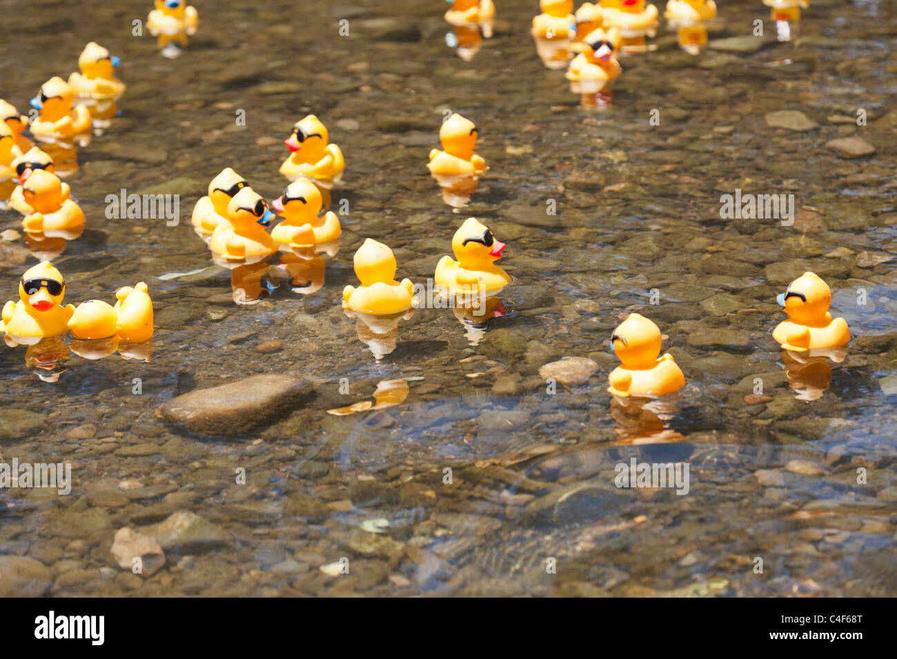 LOS GATOS, CA, USA - JUNE 12: The rubber duckies are kicking off ...