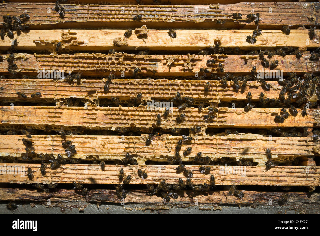 Beekeeping in a small exploitation of some twenty beehives, Anso, Huesca, Spain, Europe. - Stock Image