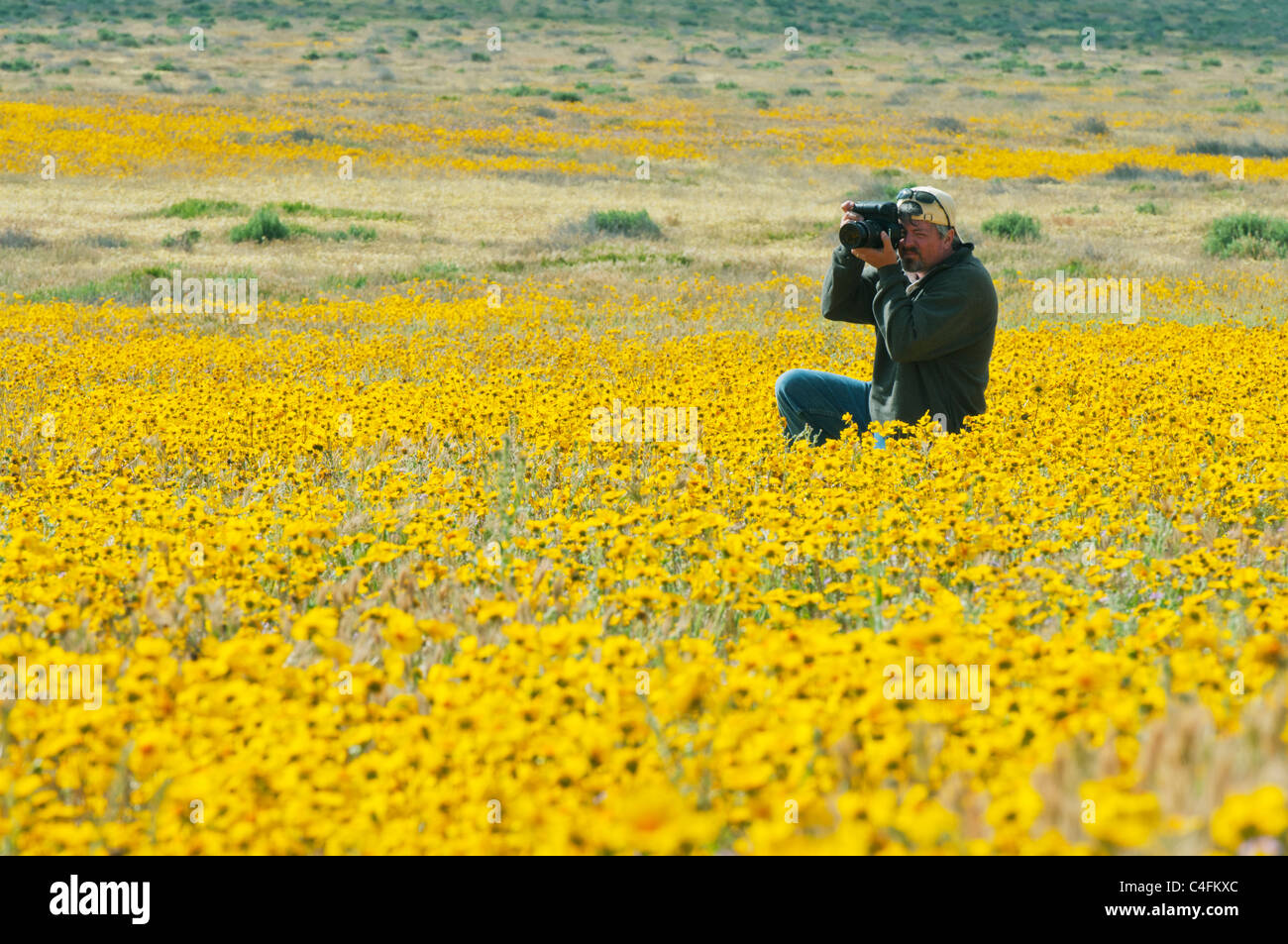 Photographer Steve Shuey photographing carpets of wildflowers, Carrizo Plain National Monument, April - Stock Image