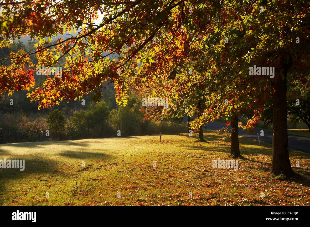 Autumn Trees in Khancoban, Snowy Mountains, New South Wales, Australia Stock Photo