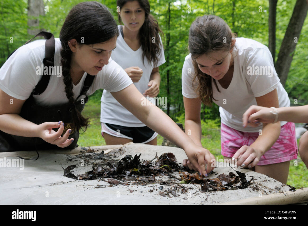 """Teenage girls picking invertebrates out of """"kick-seine"""" net for stream water quality investigation Stock Photo"""