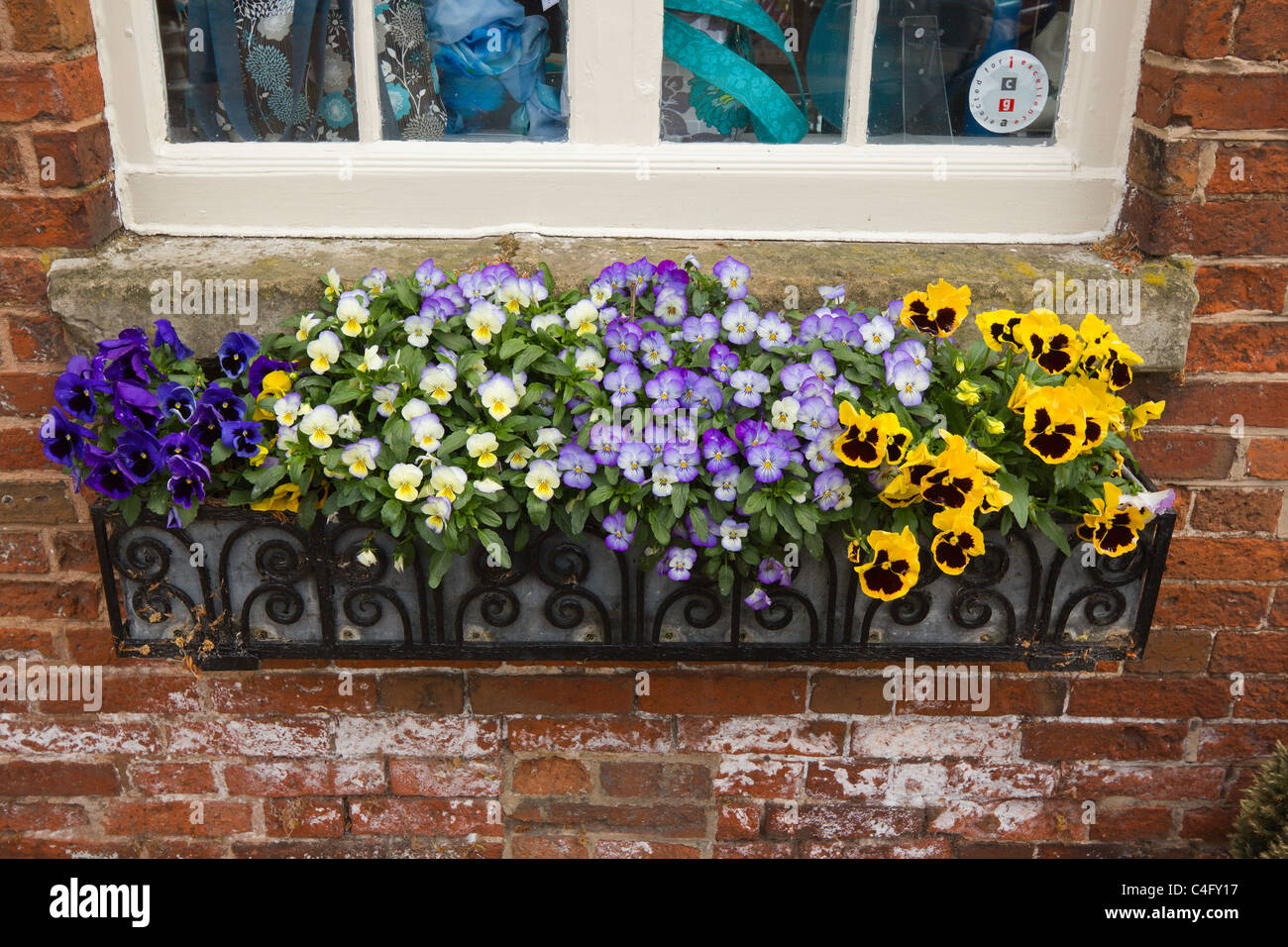 Pansies in black wrought iron window box on red brick wall, Ferrers Centre,Staunton Harold, Ashby de la Zouch, Leicestershire,UK - Stock Image