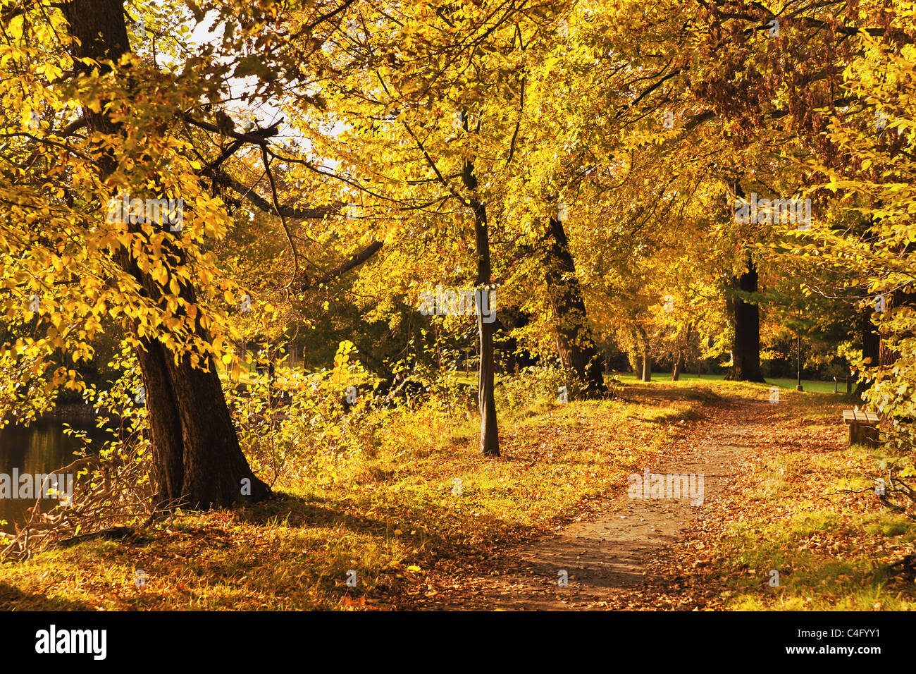 Herbst im Wald | autumn in the forest Stock Photo