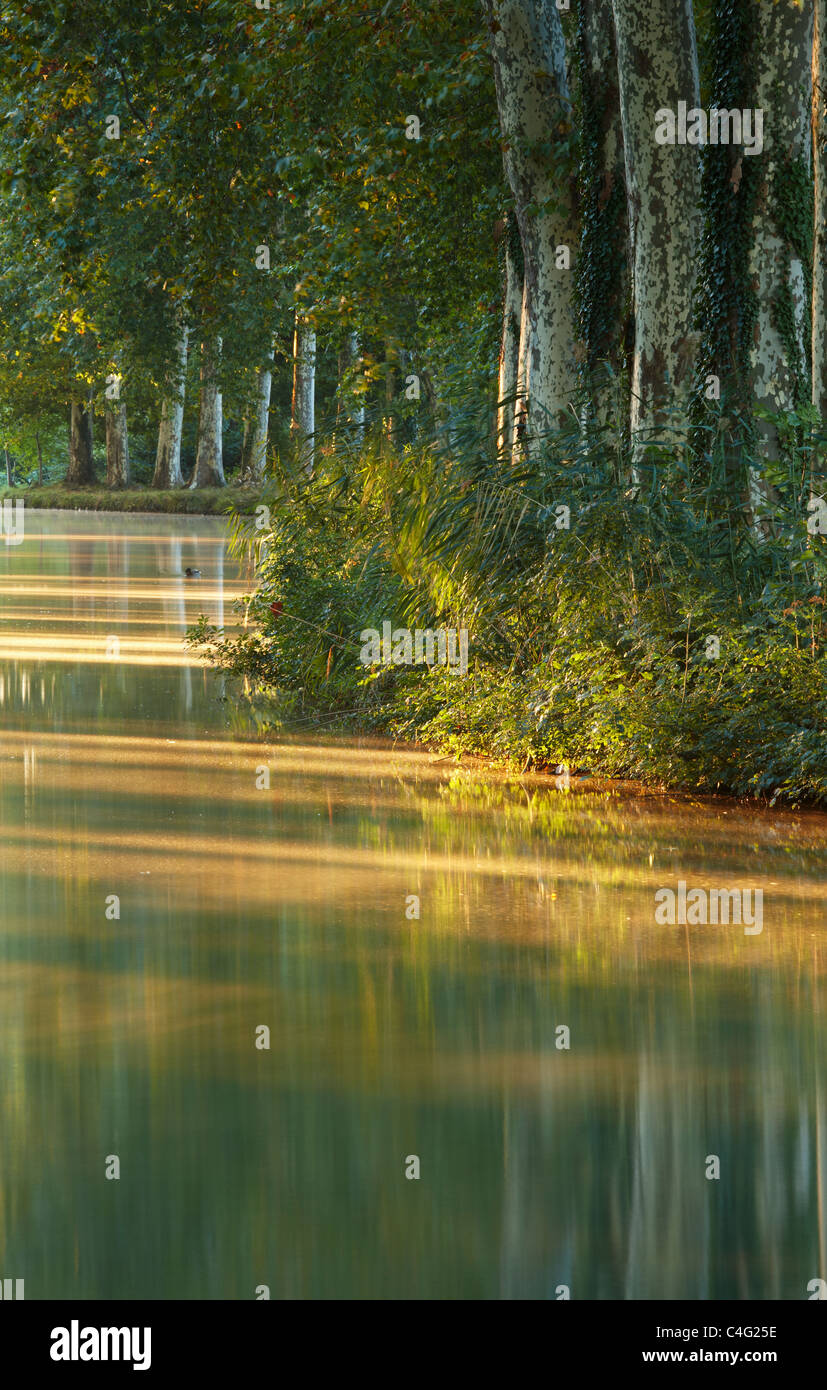 the Canal du Midi nr Castelnaudary, Aude, Languedoc-Rousillon, France - Stock Image