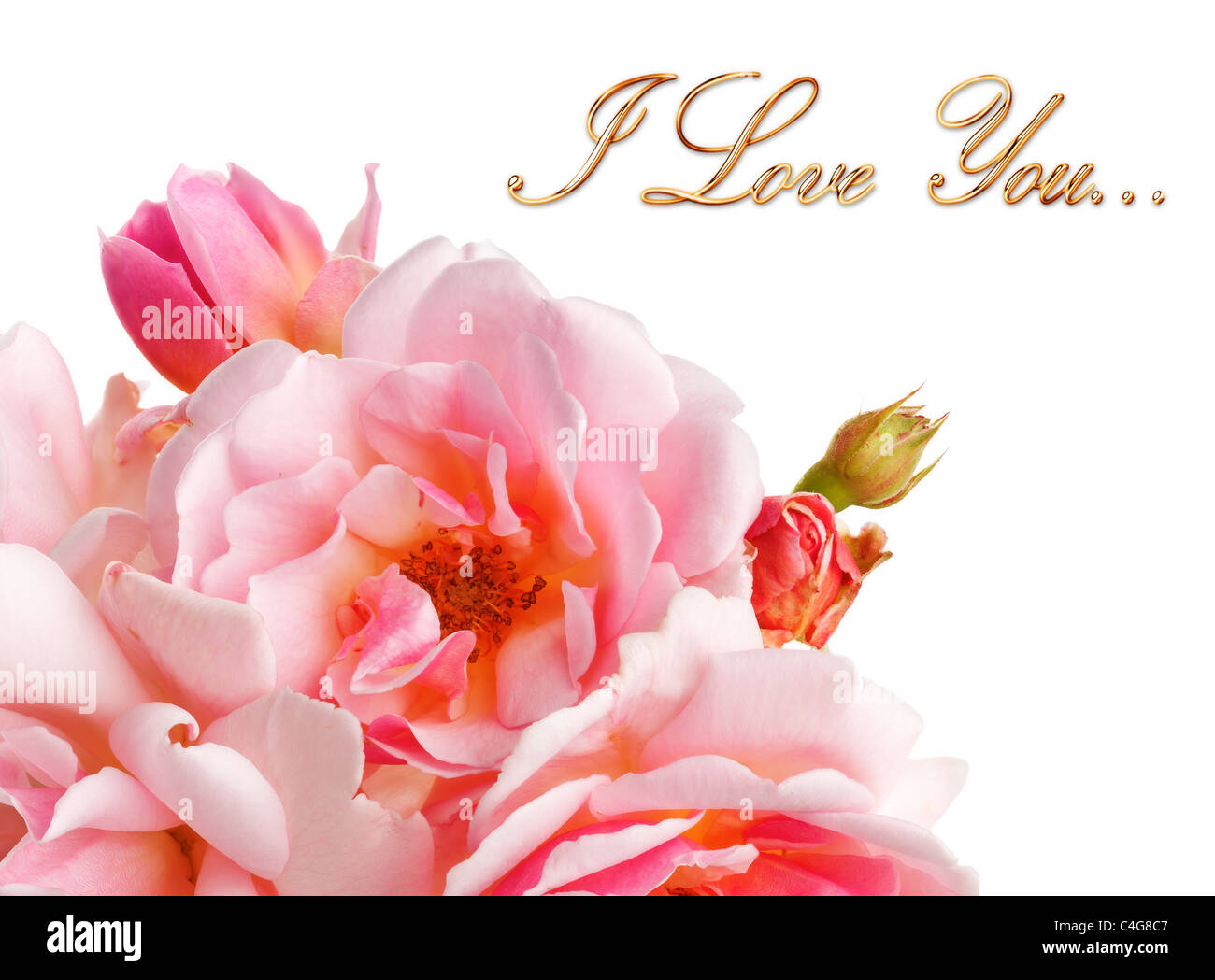 Pink Roses On A Pure White Background With I Love You Message Stock Photo Alamy