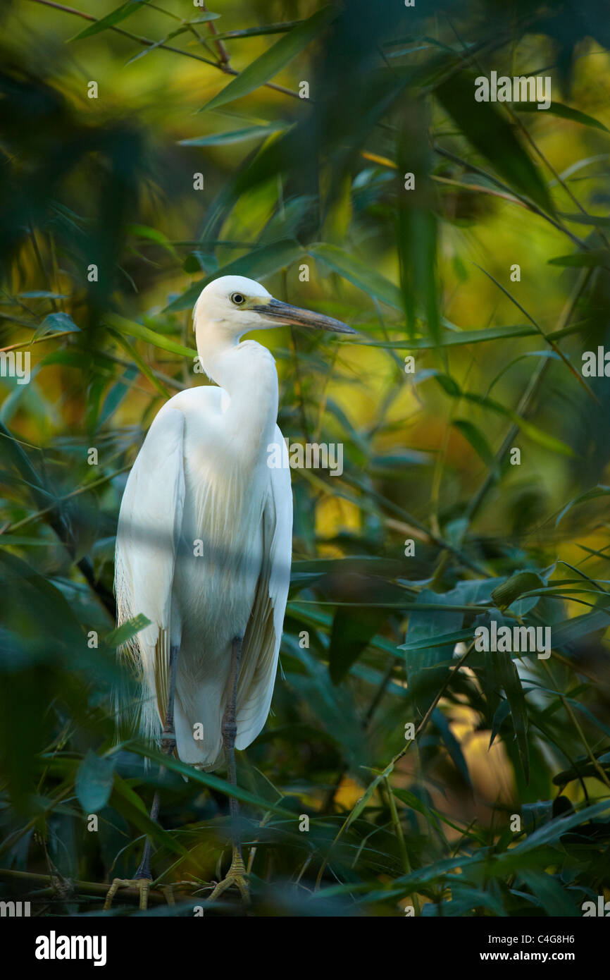 a crane in the trees nr Can Tho, Mekong Delta, Vietnam - Stock Image