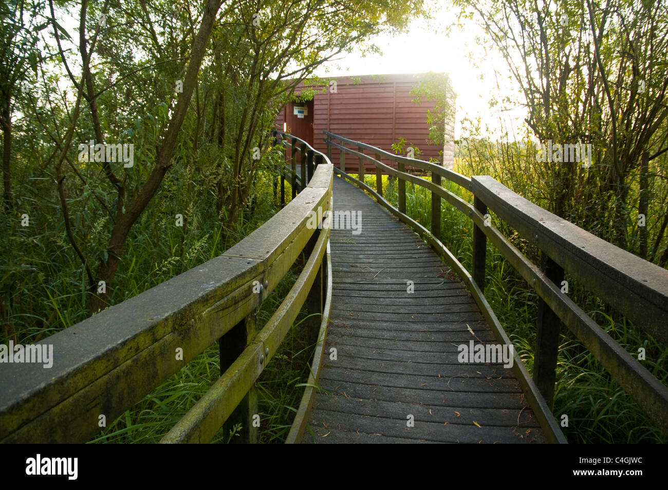 Walkway over Osier beds leading to a bird hide at a wildlife nature reserve in Gloucestershire, UK. - Stock Image