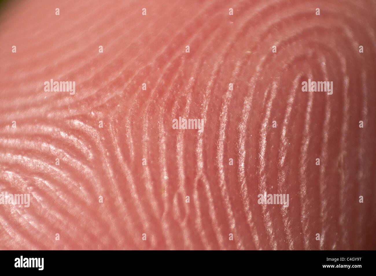 fingerprint - Stock Image