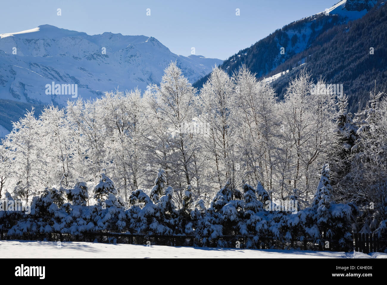 Austria, Europe. White hoarfrost on the branches of backlit trees in alpine mountains. - Stock Image