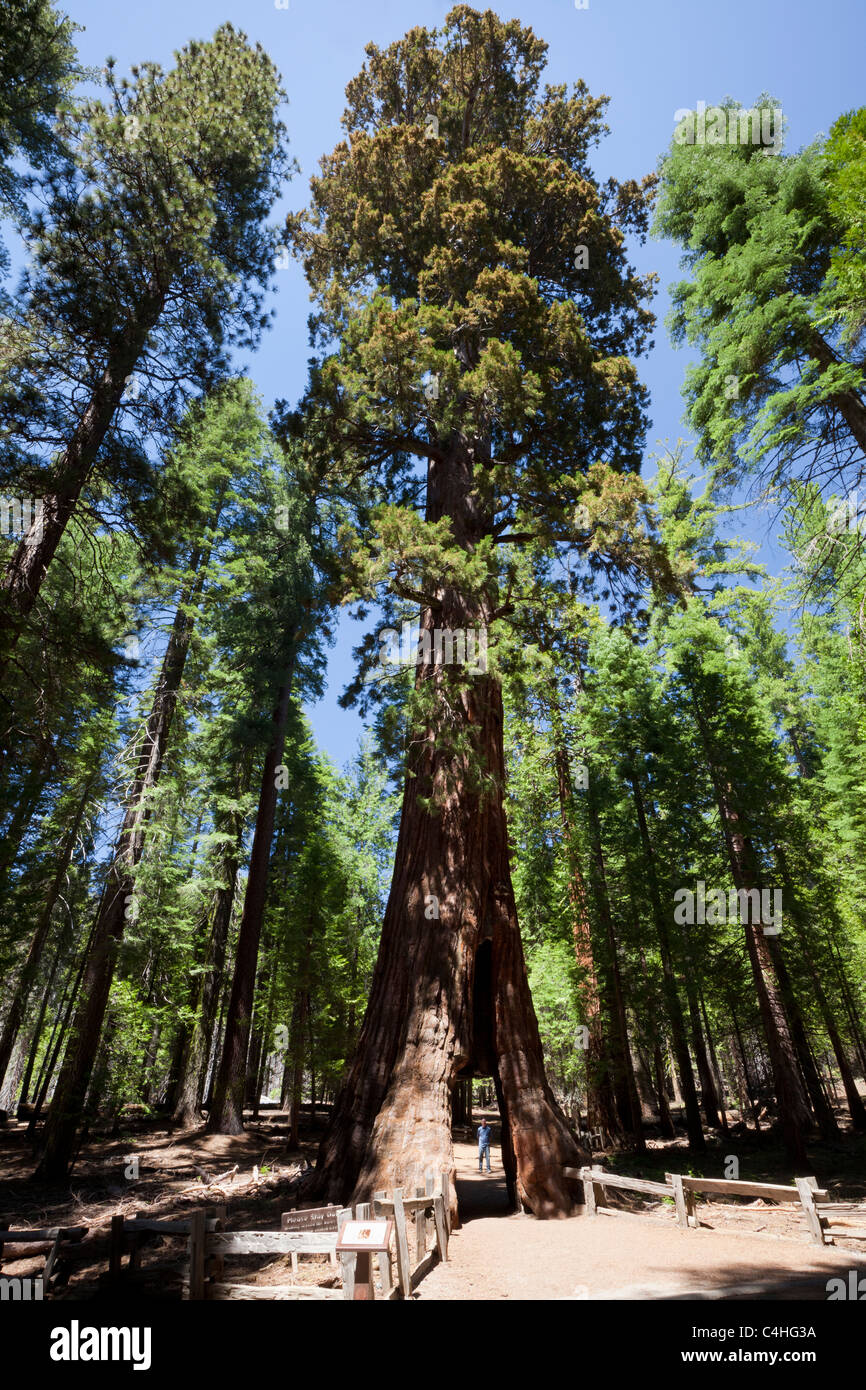 "sequoia national park sex personals But as more sequoia groves were discovered around the state and tourists were  drawn  the conventional avenues for dating at your age — senior hikes, senior   ""before i turn 67 — next march — i would like to have a lot of sex with a man i  like  the mobb deep rapper's jacket, hanging in desert park,."