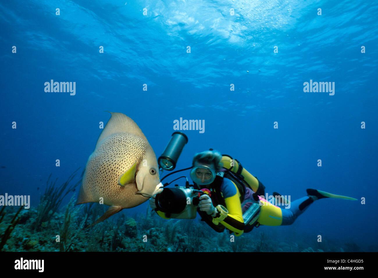 Scuba diver photographing a Caribbean angelfish (Pomacanthus arcuatus), Stock Photo