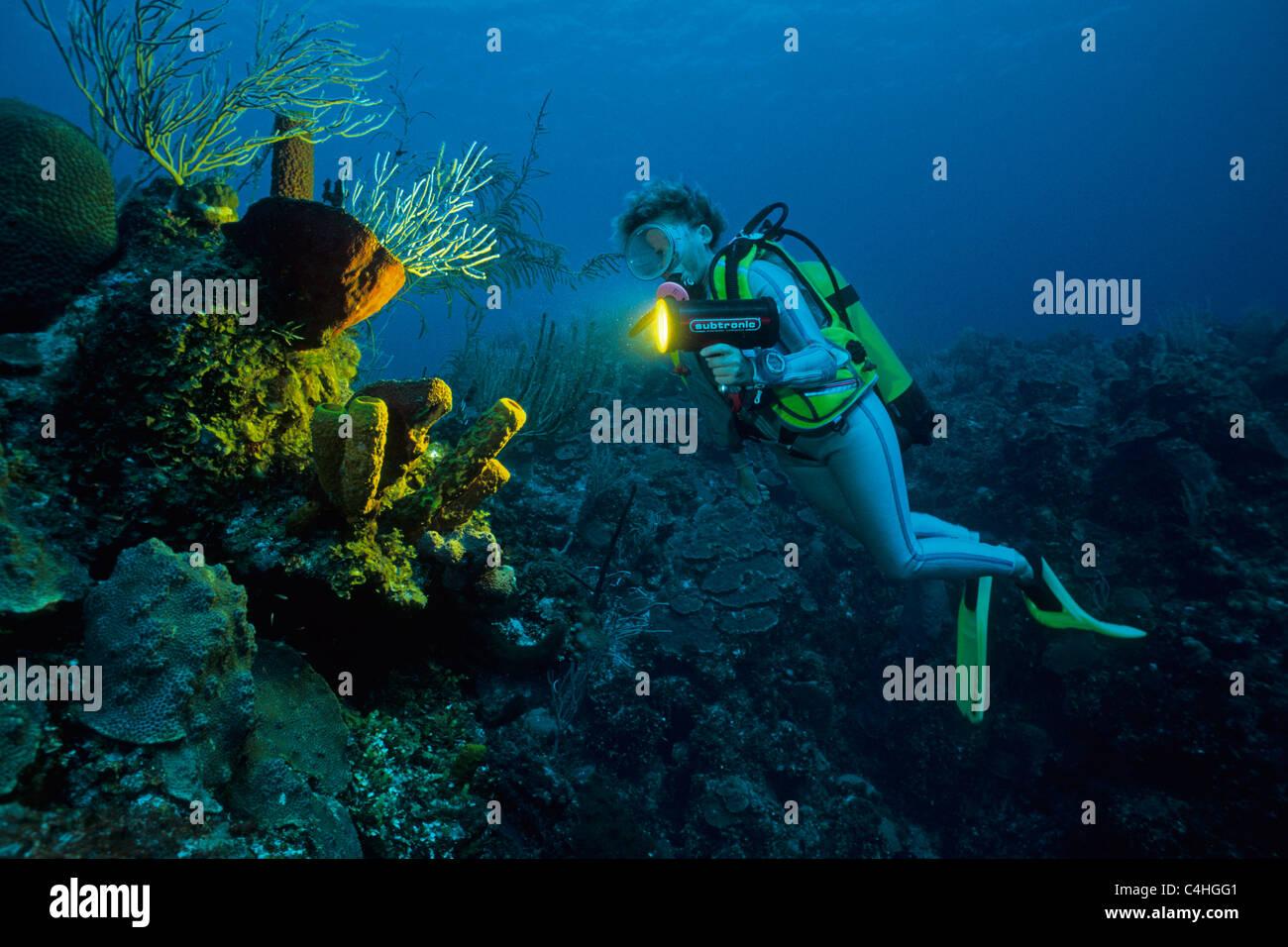 Scuba diver at sponges, caribbean coral reef, Cuba, Caribbean sea - Stock Image