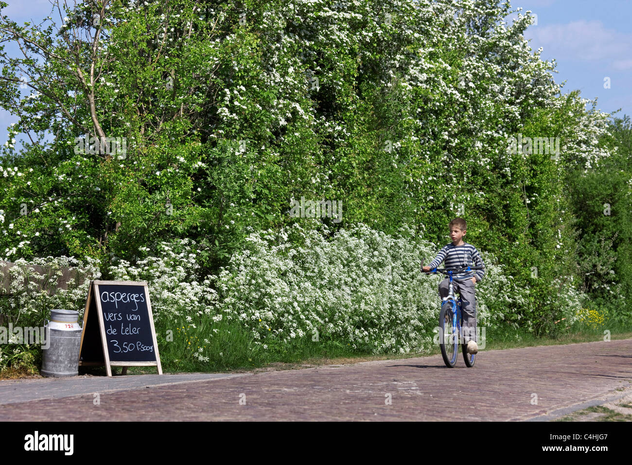 Farmer's notice board and Dutch boy with wooden clogs riding bicycle at Schouwen, Schouwen-Duiveland, Zeeland, - Stock Image