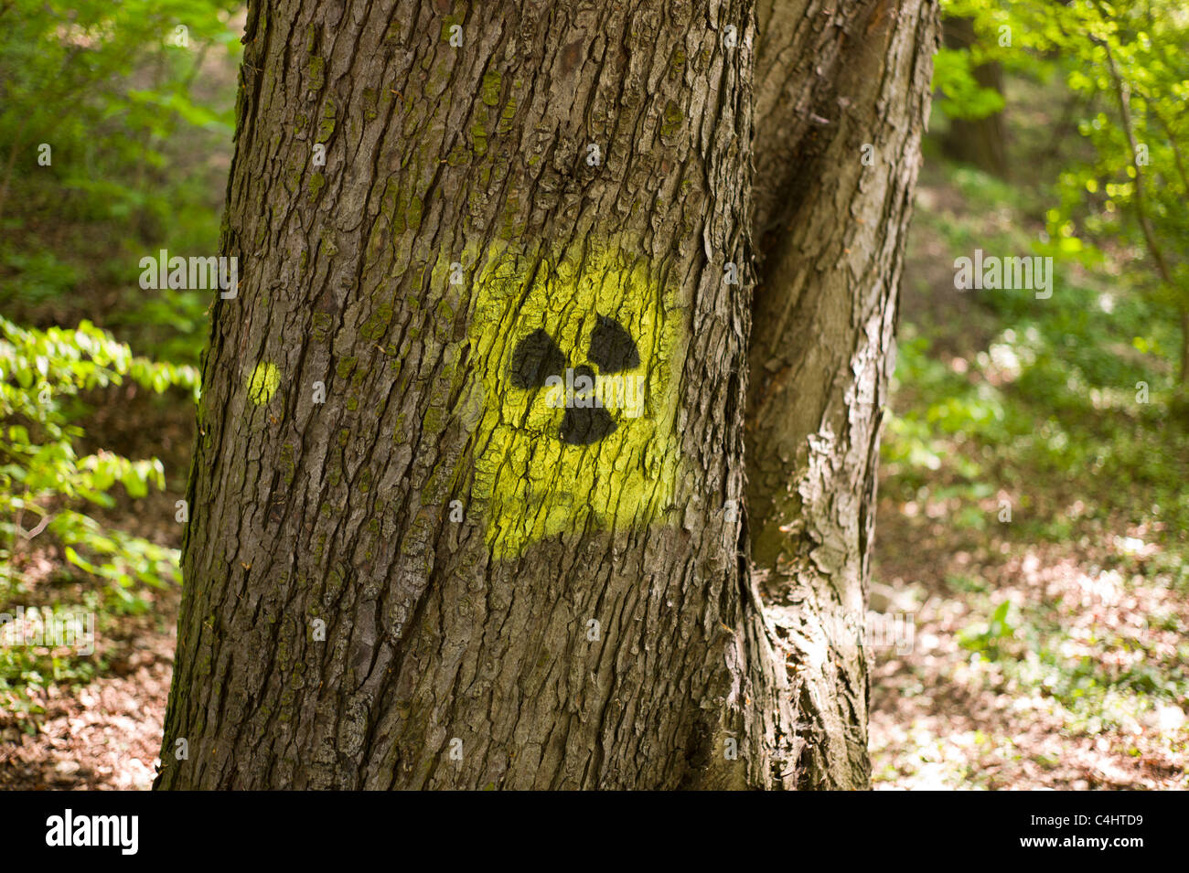 Graffito / graffiti: Black and yellow radiation symbol (trefoil) spayed on on the trunk of a tree in Munich, Germany Stock Photo