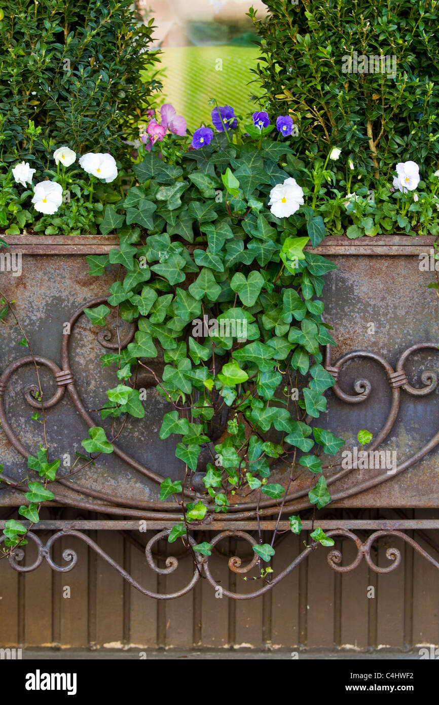 Ivy and flowers on a decorative flower box - Stock Image