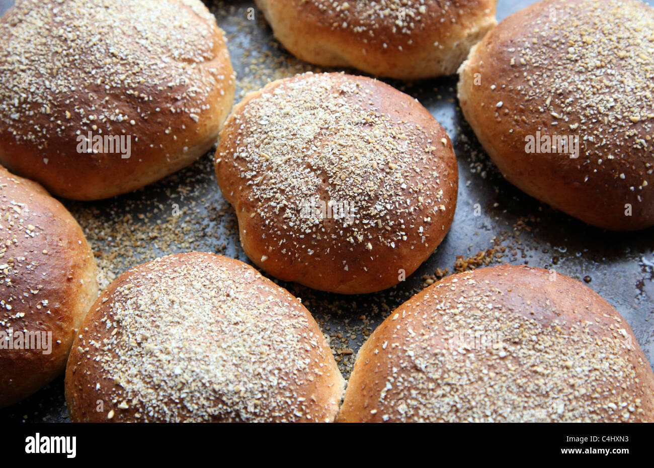 Freshly made wholemeal bread rolls on a baking tray just taken from the oven - Stock Image