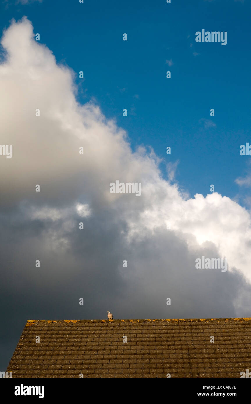 Pigeon viewing storm clouds from house roof top - Stock Image