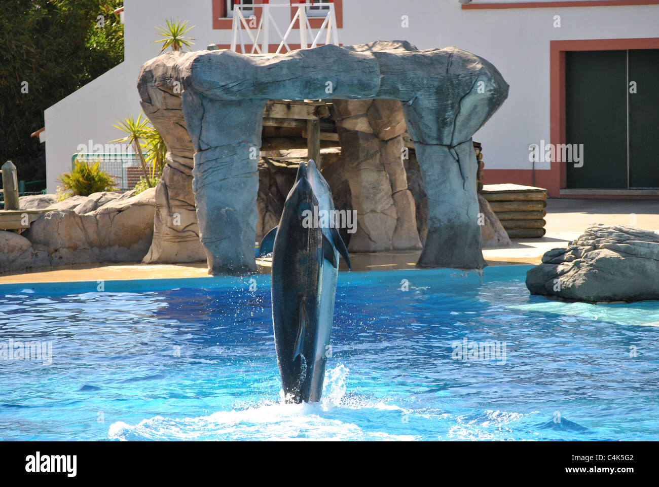 Dolphins dancing at zoo`s aquarium Lisbon, Portugal Stock Photo