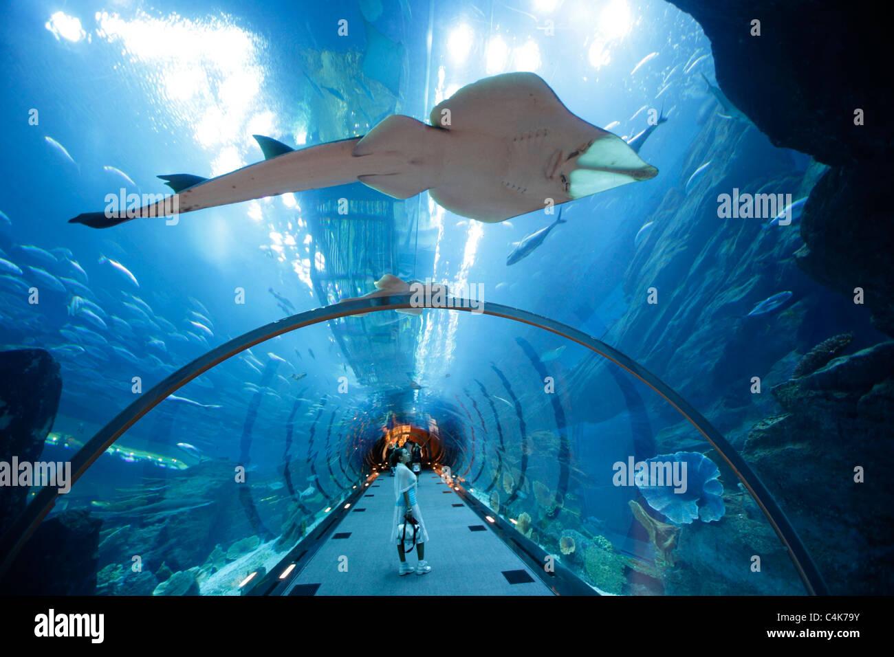 Aquarium and underwater Zoo in the Dubai Mall, Dubai, United Arab Emirates Stock Photo