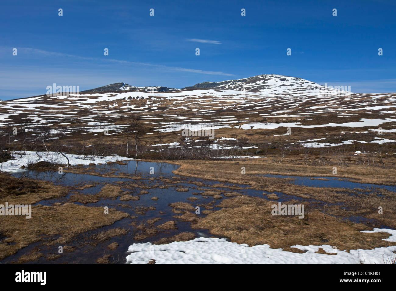 The tundra in the spring at Borgafjäll / Borgafjaell in Jämtland, northern Sweden - Stock Image