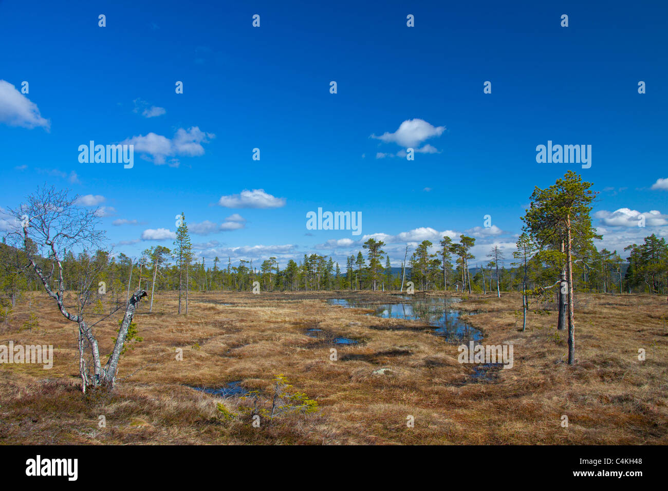 Moorland at the Fulufjället National Park, Dalarna, Sweden - Stock Image