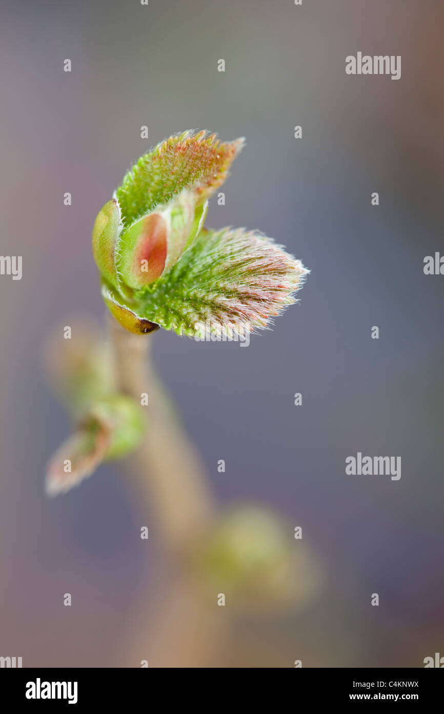 Sapling Stock Photos Sapling Stock Images Alamy