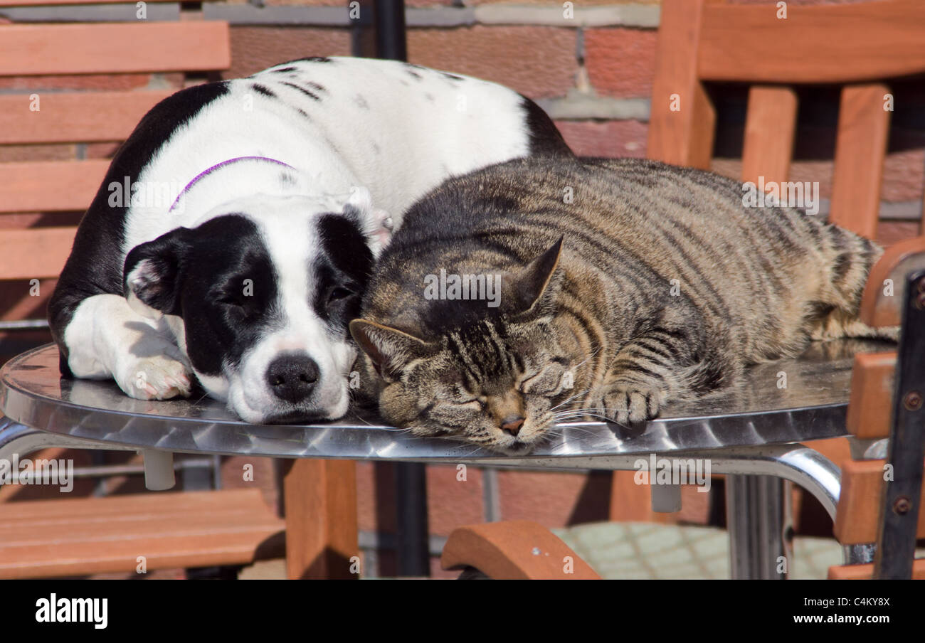 Cats and Dogs. These buddies love sleeping together in the sun - Stock Image