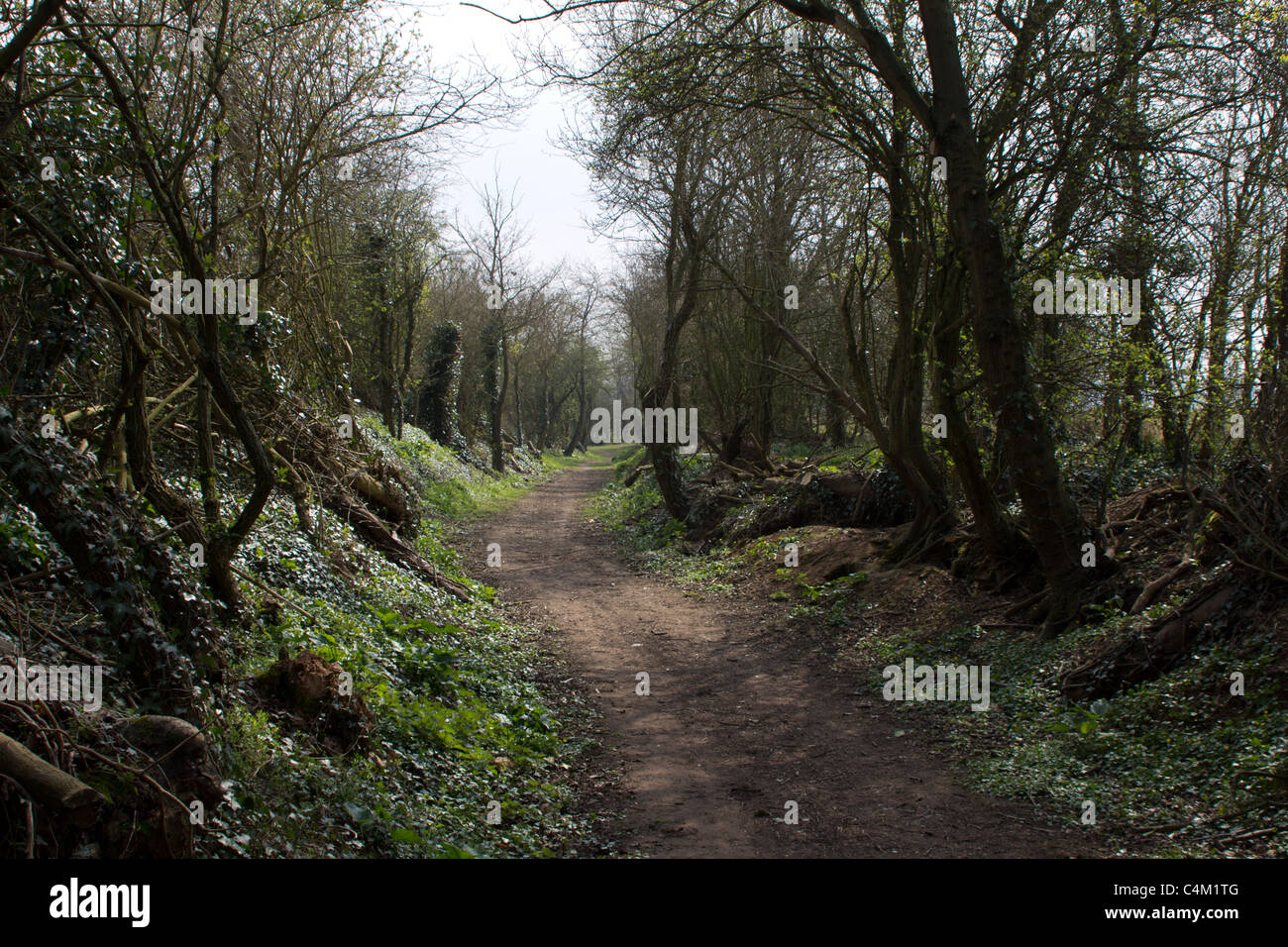 Country walk through tree line path - Stock Image