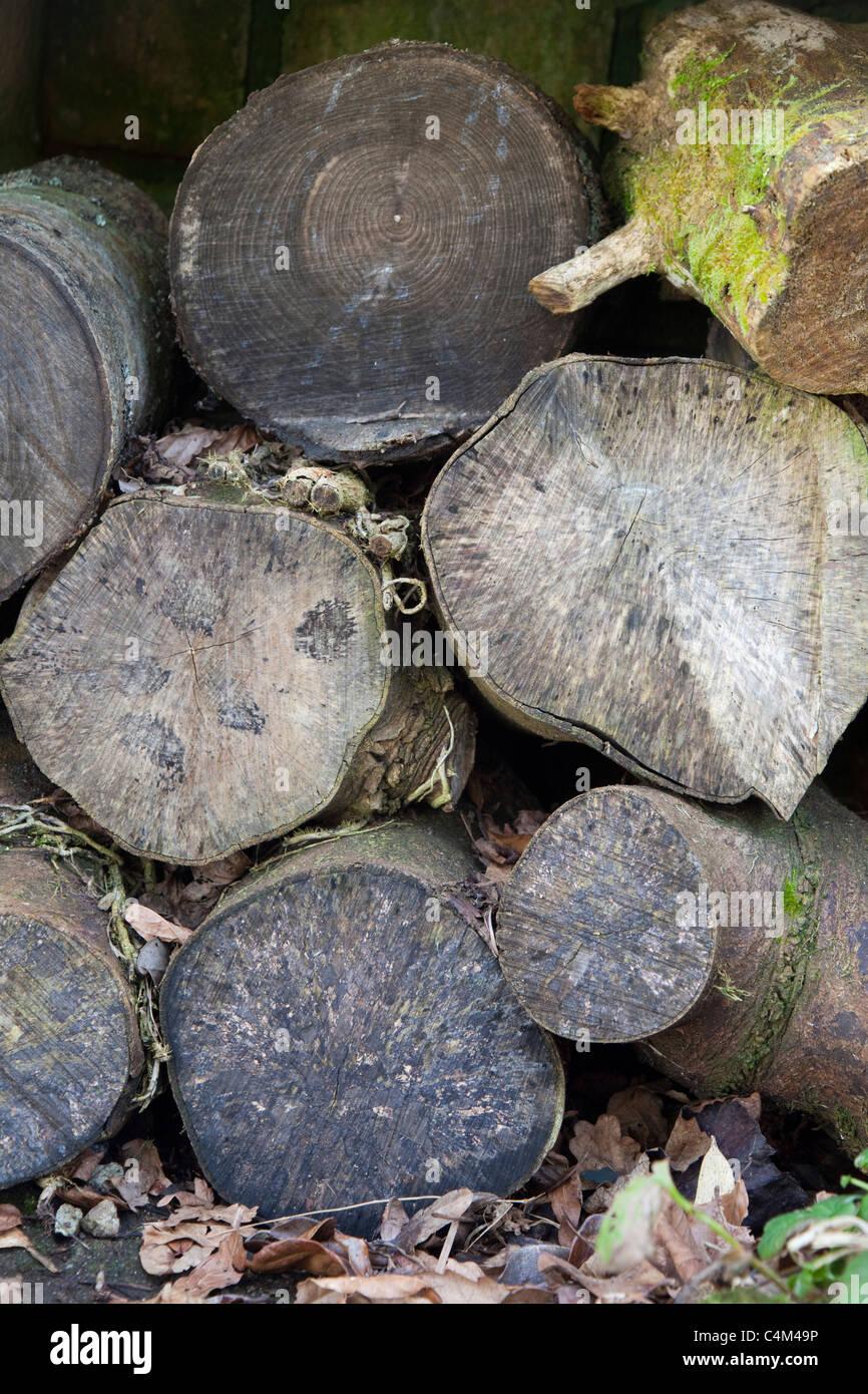 Log Pile - Stock Image