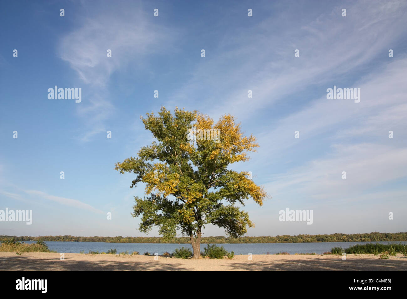 Tree on the riverbank - Stock Image