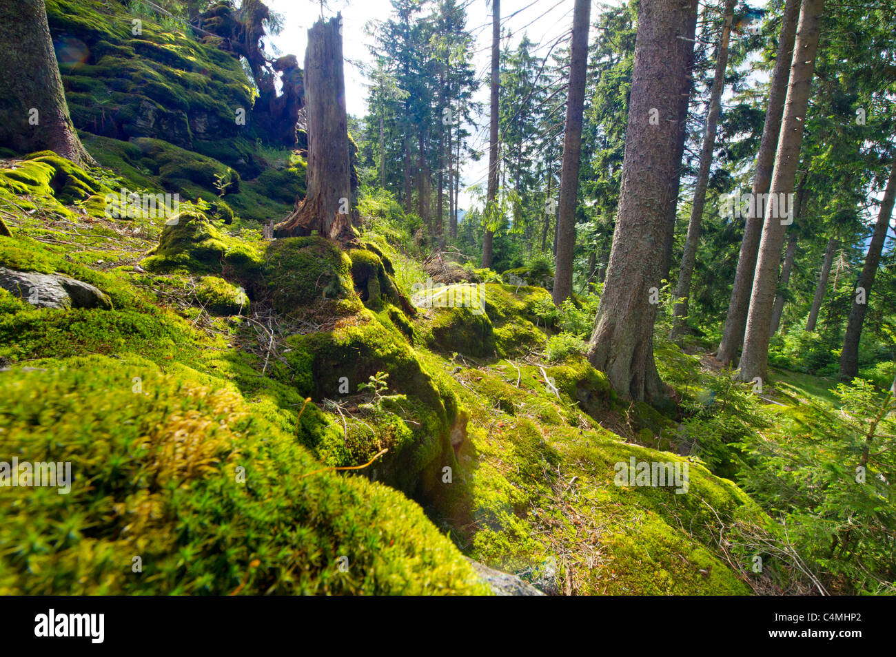 Nationalpark NP Bayerischer Wald Bavarian Forest Mt. Falkenstein Mountain Spruce Forest vacation Mountains rock - Stock Image