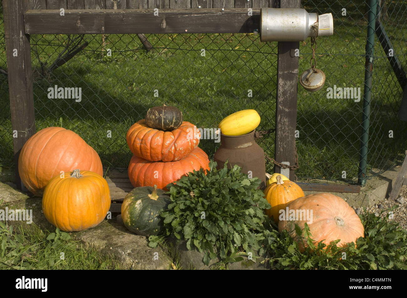 different pumpkins - Stock Image